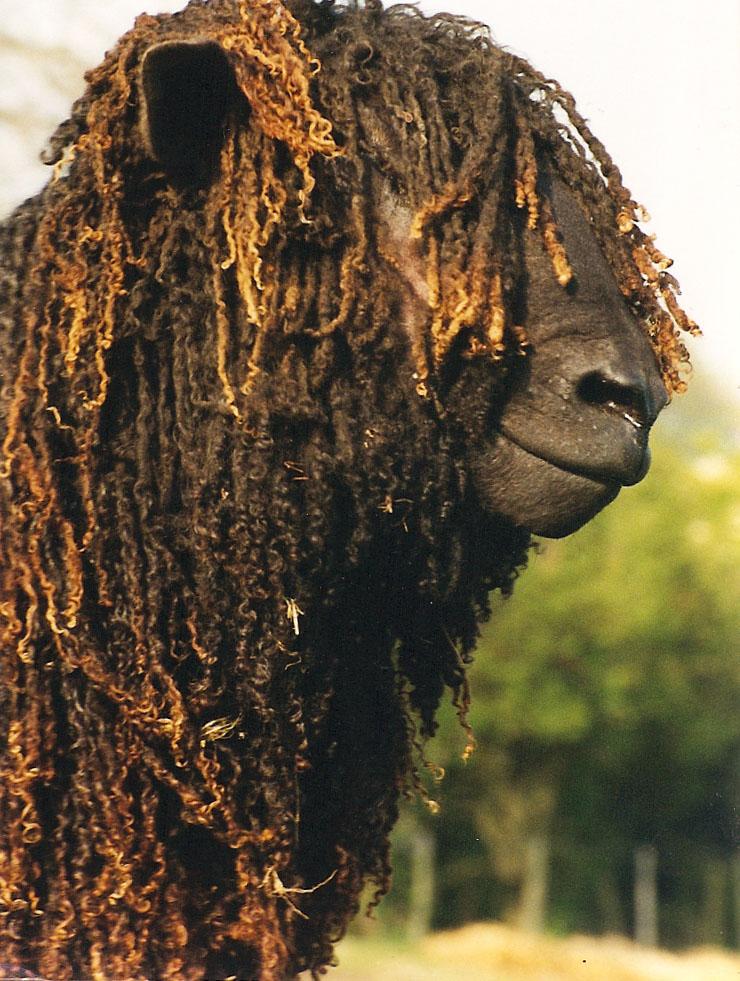 Black sheep profile